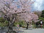 Kasumigajou_kouen9