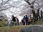 Miharu_takizakura7