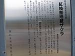 Benisidare_zizouzakura4