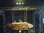 Aquamarine_fukushima12