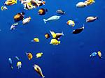Aquamarine_fukushima7