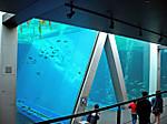 Aquamarine_fukushima9