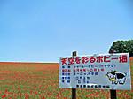 Chichibukouge_bokujou2