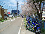 Kannonjigawa_sakuramaturi1