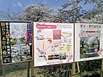 Kannonjigawa_sakuramaturi2