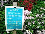 Cyausuyama_kouen12